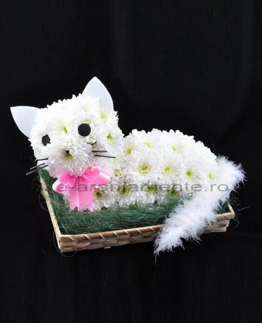Pisicuta din Flori