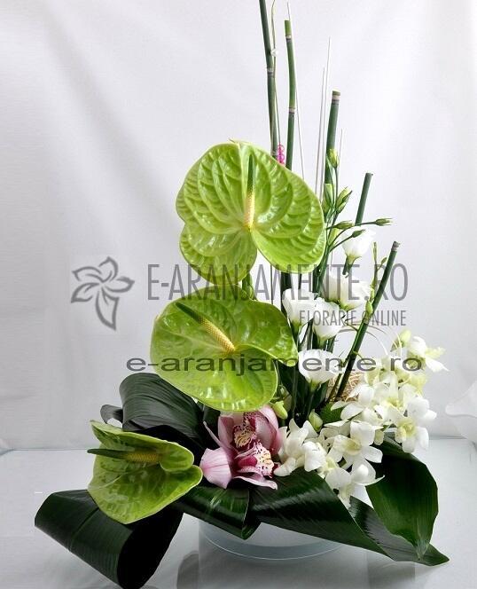 Anthurium si Orhidee