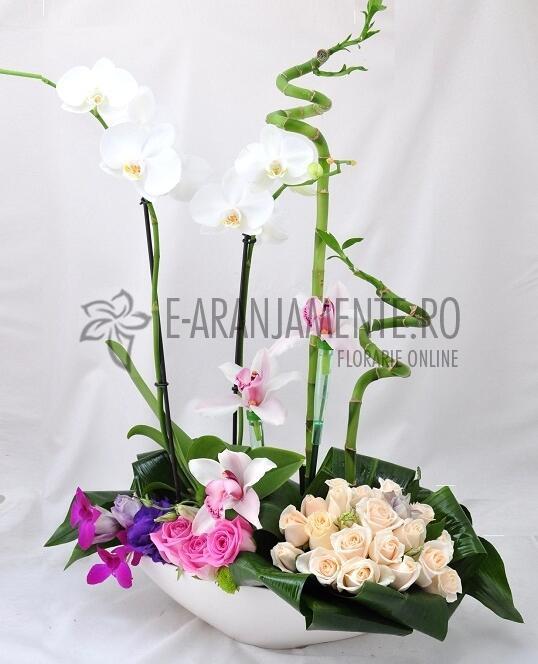 Gradina cu Trandafiri si Phalenopsis