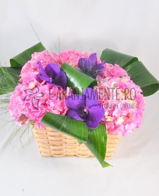 Hortensii si Orhidee